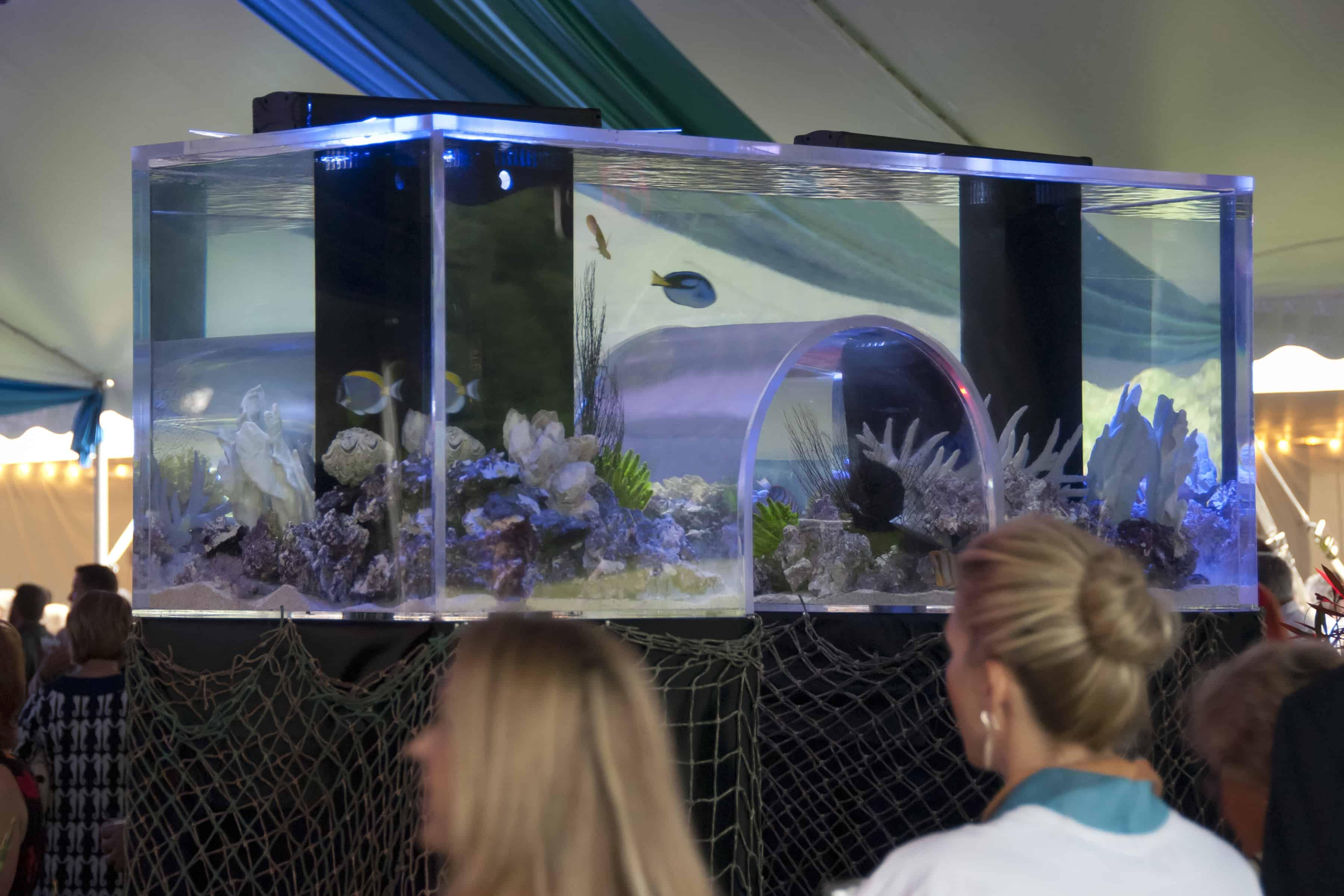 Aquarium Store Near Clifton Park Ny Aquarium Store Near