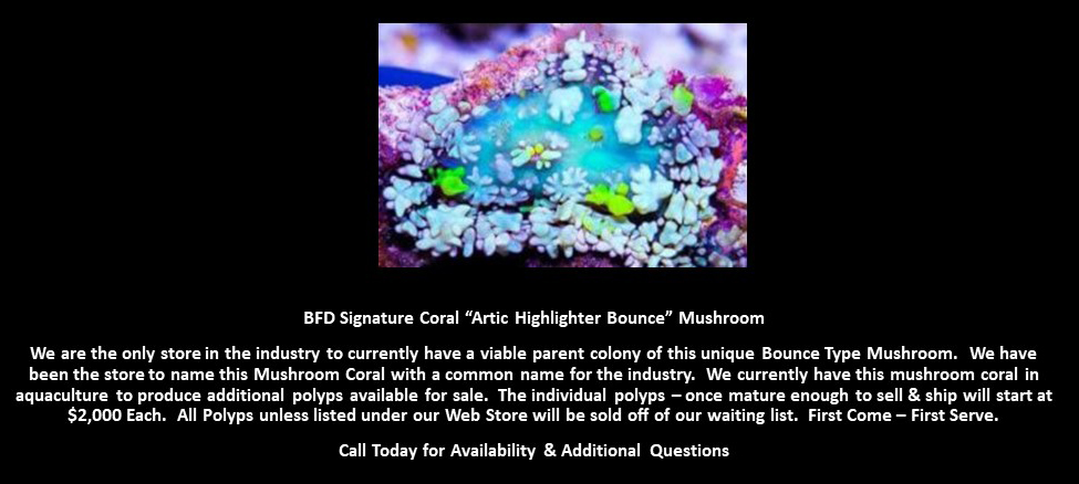 BFD Artic Highlighter Bounce Mushroom